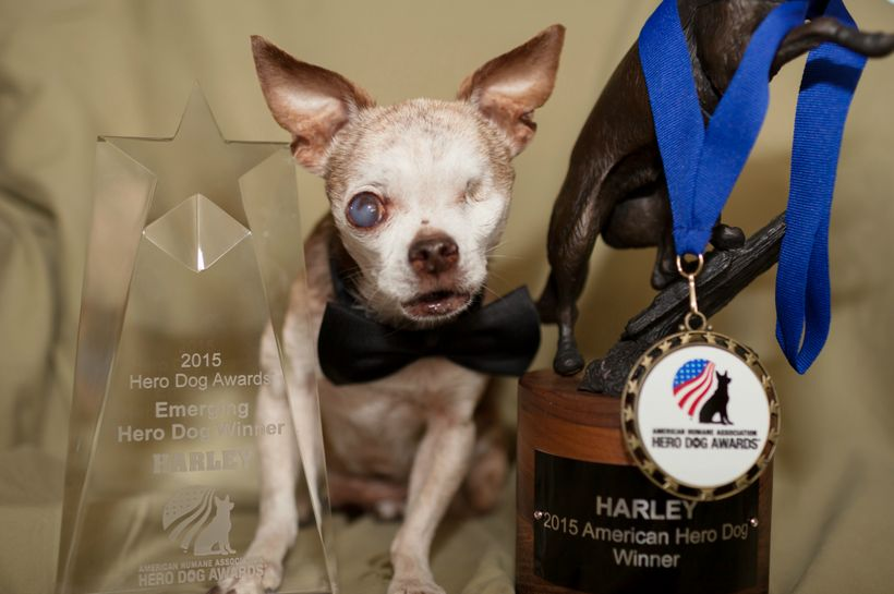 Harley with his 2015 American Hero Dog Awards