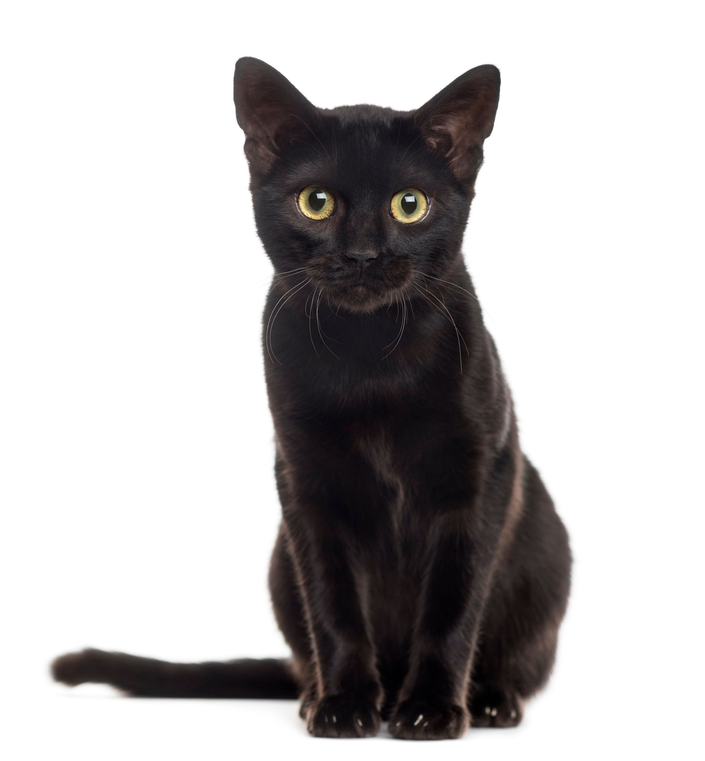 Go pet a cat! November 17 is National Black Cat Day.