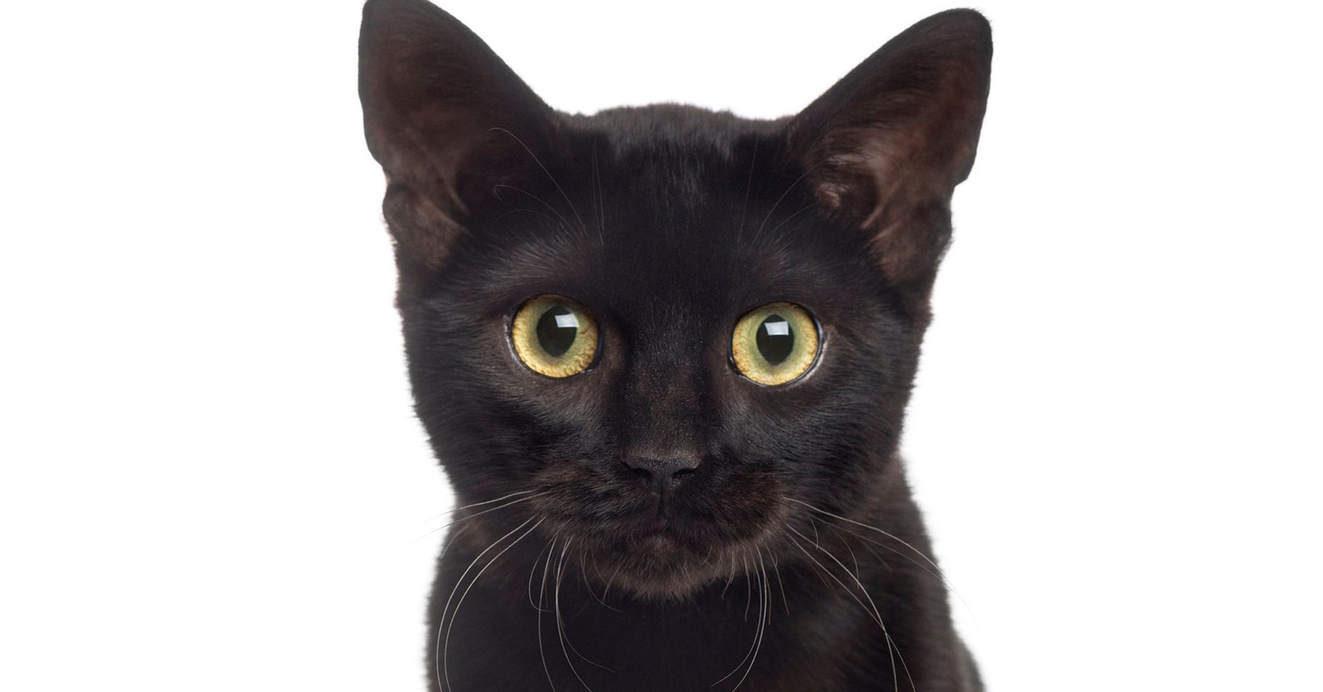 Stop Hating On Black Cats! It's National Black Cat Day ...