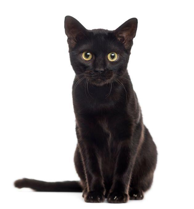 Black Cat Nude Photos