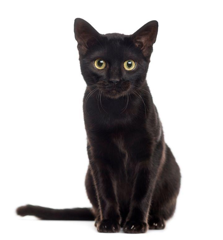Black Cat Meow Mix