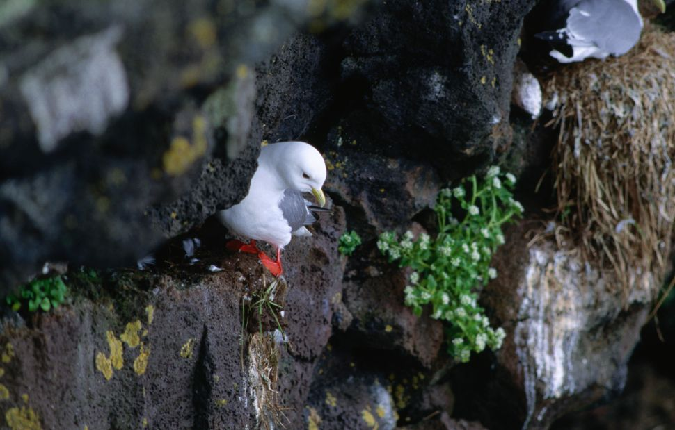 More than 200 species of seabird breed on St. Paul island.