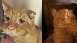 'Unadoptable' Sad-Faced Cat Shows That Everyone Deserves A