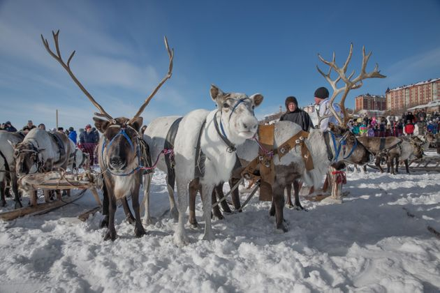The basis of the Nenets way of life is reindeer herding. Groups of reindeer numbering up to several hundred...