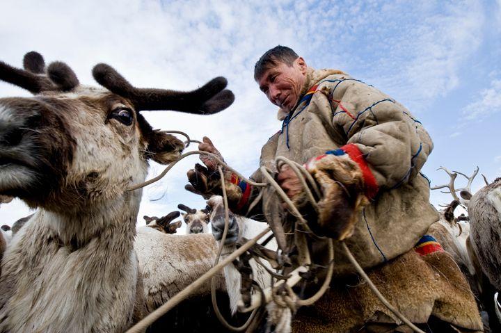 A Nenets herder