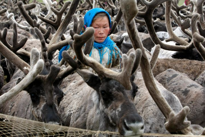 A Nenets woman stands with reindeer on the Yamal Peninsula, north of the polar circle.