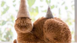 Photographer Makes Hats For His Pet Cats Using Their Own