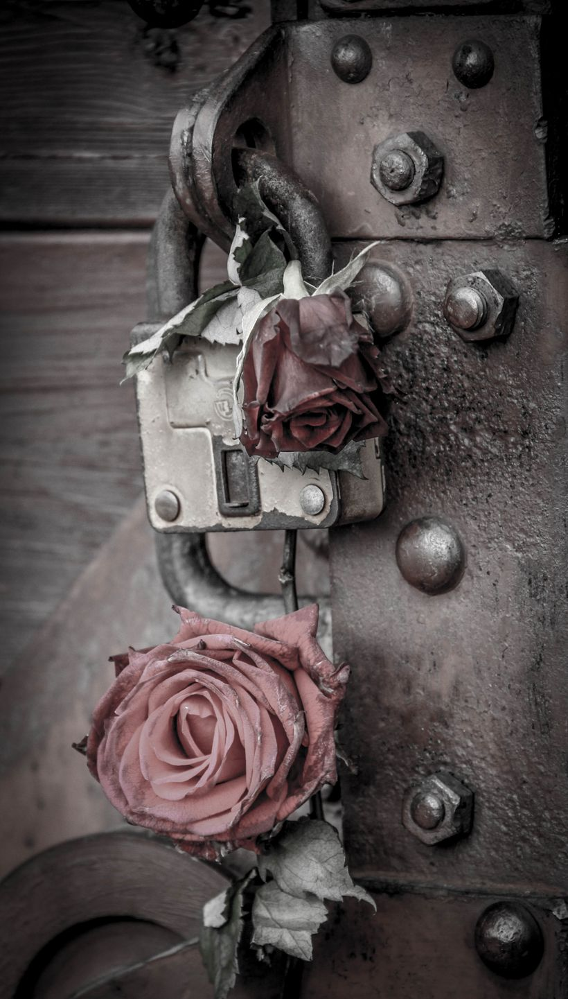 A touching gesture: some guest had placed two roses on the lock on the rail car on display that used to bring prisoners to th