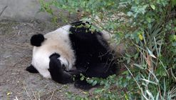 American-Born Panda Twins Have Trouble Adjusting To Life In