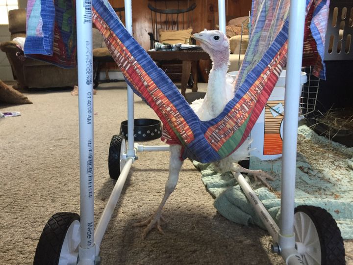 We built a wheelchair for Avery, but most sick or injured birds receive no care.
