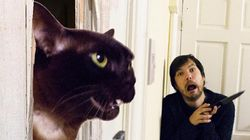 Dude Recreating Movie Scenes With His Cats Is Pretty Much