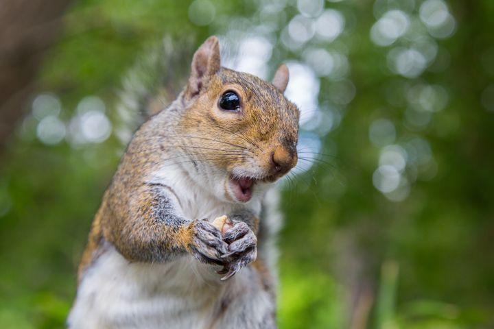 Actual squirrel not pictured.