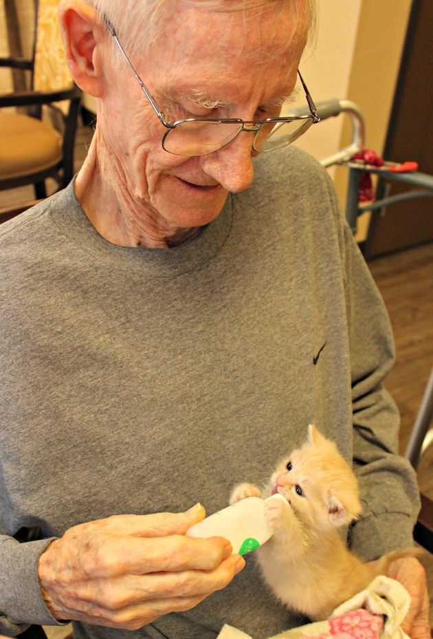 Orphaned Kittens Bring Immeasurable Joy To Dementia