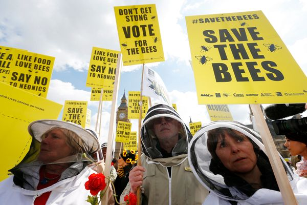 "Pesticides and other chemicals can be <a href=""http://www.npr.org/sections/thesalt/2015/04/22/401536105/buzz-over-bee-health-"