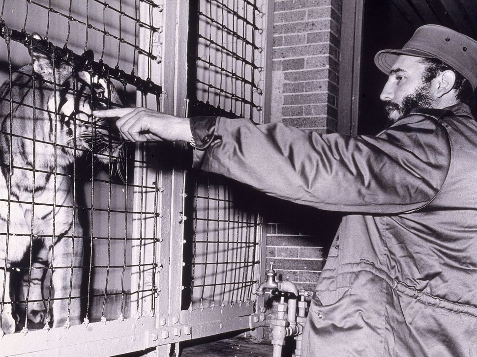 Castro points at a Bengal tiger in a cage at the Bronx Zoo, New York City, on April 24, 1959.