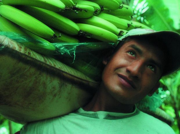 Metropolitan Touring offers a tour of a banana plantation in Ecuador.
