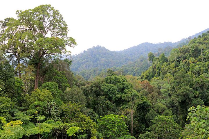 World Wildlife Fund is working with a wide variety of partners to save Thirty Hills, one of the last great stands of rain for