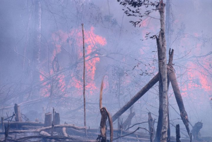A forest burns to clear land for development and planting.