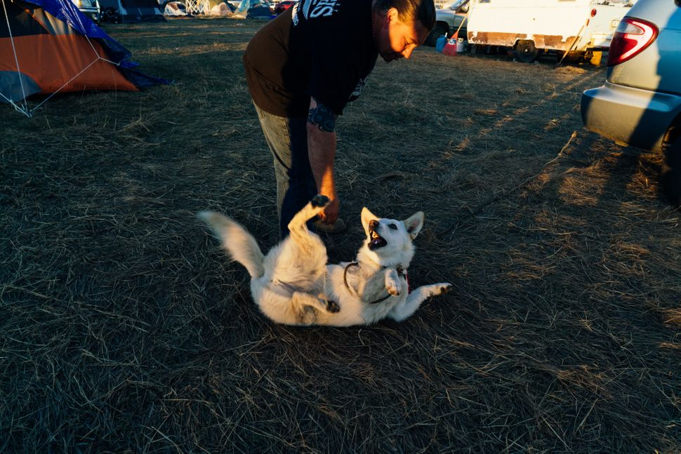 """Dogs or """"Sunka"""" hold a sacred place in Lakota tradition and are a joyful presence in camp."""