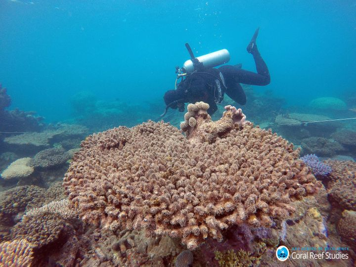 Scientists assess coral mortality on Zenith Reef after the most recent bleaching event.<i></i>