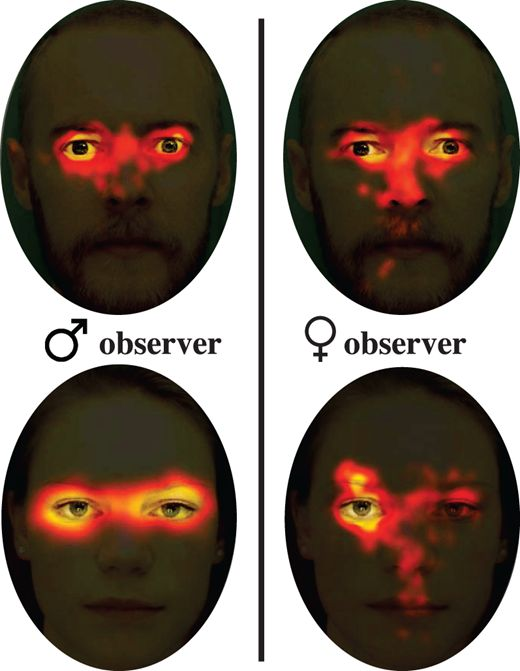 The heat maps above show eye-scanning patterns of male and female participants.