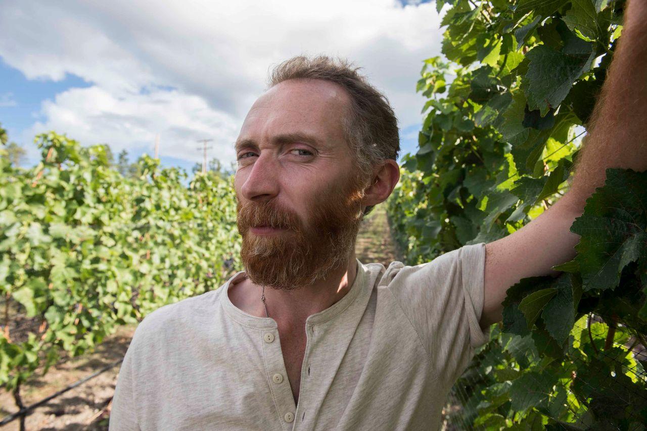 Vincent van Gogh lookalike Daniel Baker in the Pinot Noir vineyard at Martin's Lane Winery in the Okanagan Valley, British Columbia.