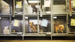 Dogs Killed Days After Being Rescued To Teach Student Vets Dissection, Says Animal
