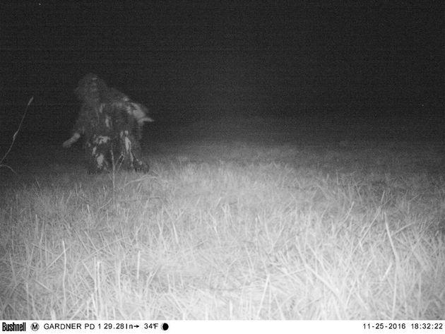 夜中の公園に、サンタやビッグフットが相次いで出没 警察が監視カメラ画像を公開