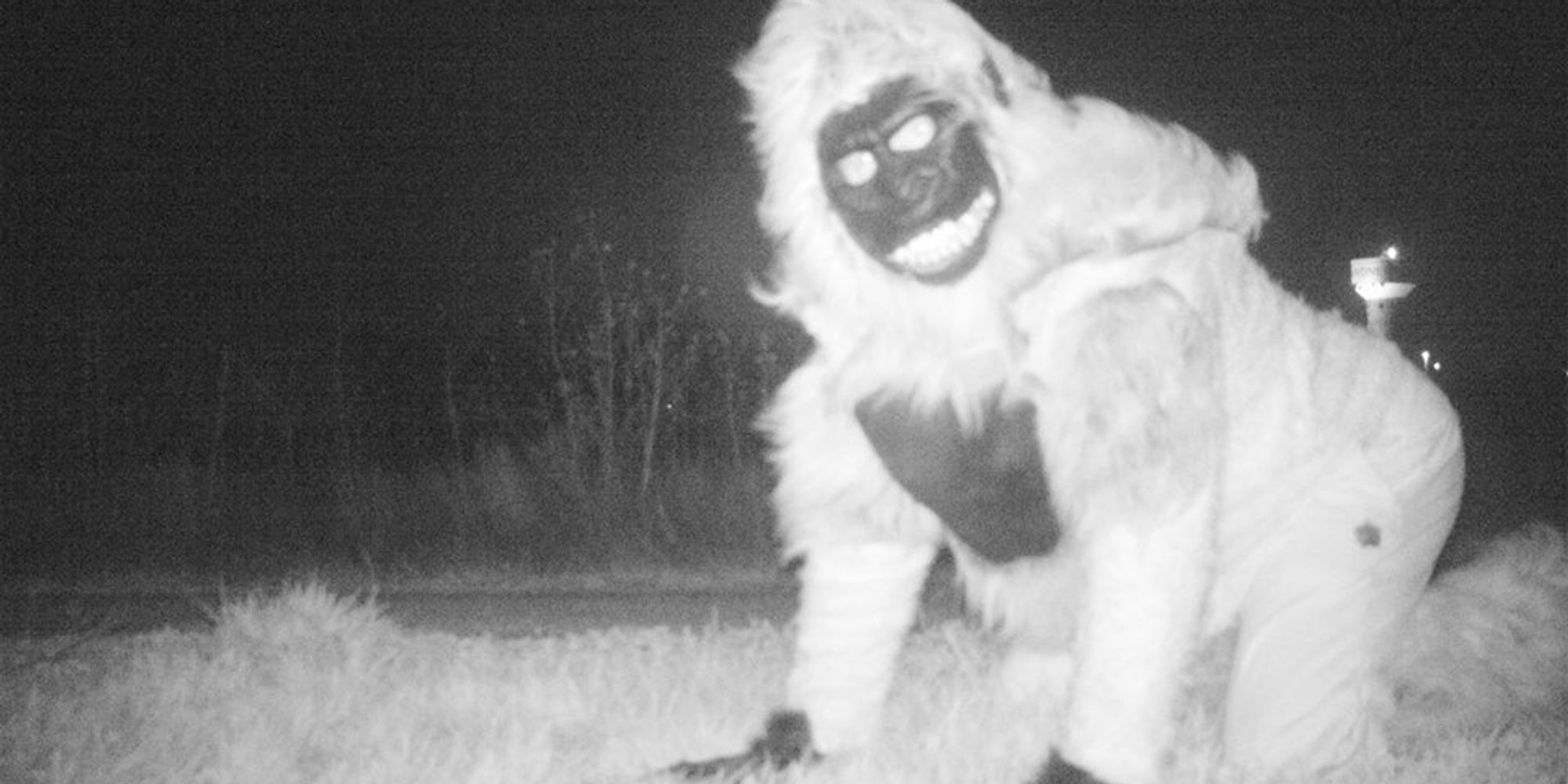 This City's Nighttime Wildlife Cam Got Real Weird, Real Fast