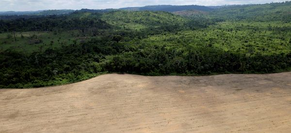 Deforestation Rates Skyrocket In Brazil As Country Struggles To Save The Amazon