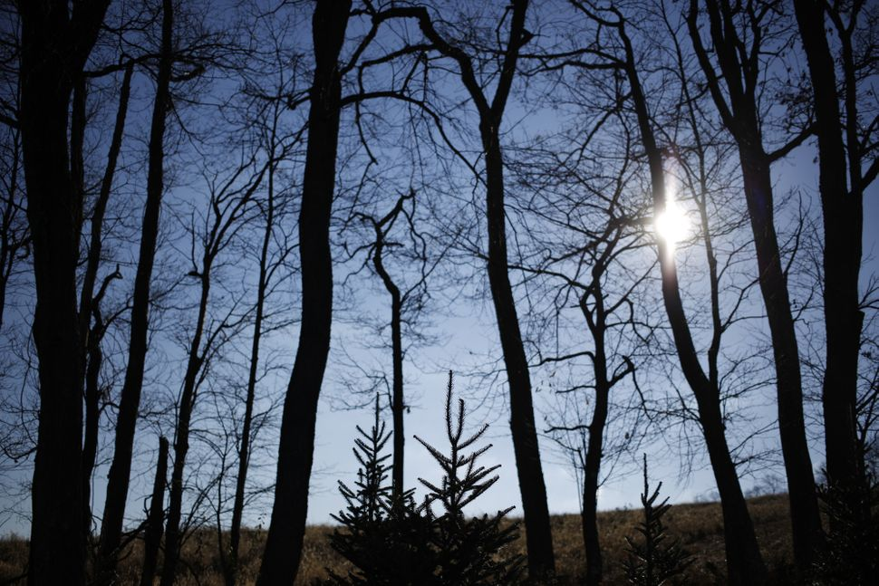 Fir Christmas trees stand at Brown's Tree Farm in Muncy, Pennsylvania, U.S., on Wednesday, Nov. 23, 2016.There are clos