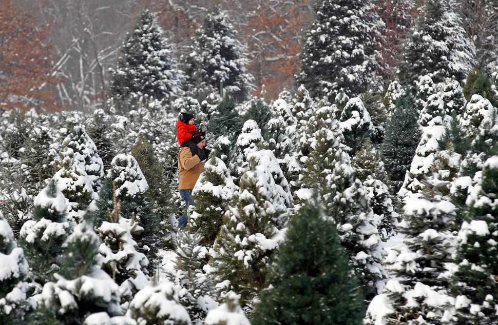 In drought-stricken states across the county, Christmas tree farmershave complained of dry and dying trees this year. R