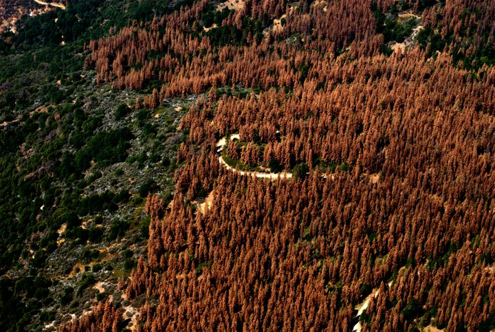 """""""These dead and dying trees continue to elevate the risk of wildfire, complicate our efforts to respond safely and effectivel"""