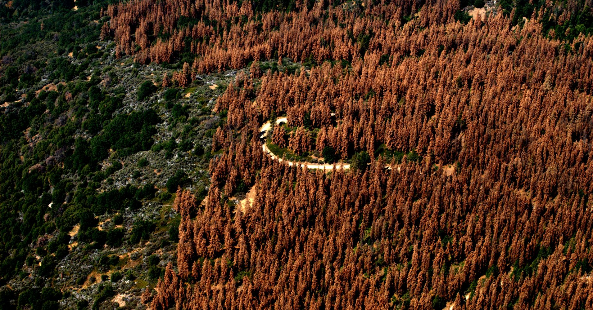 An Unprecedented 102 Million Trees Have Died In