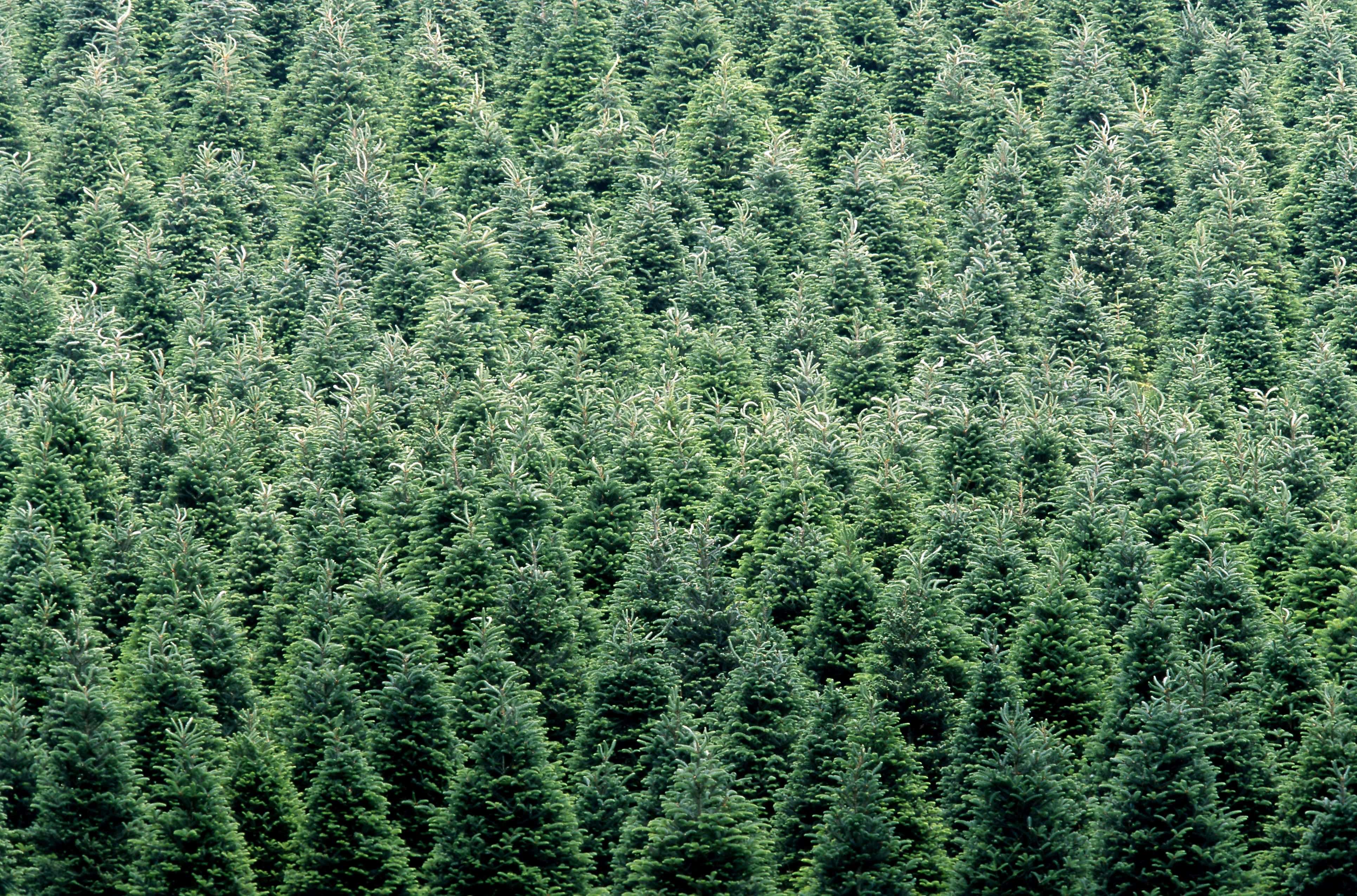 artificial trees need to be used for a long time to make them a more ecofriendly choice