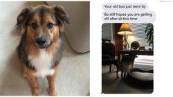 Dog's Favorite Human Left For University, But He Still Waits For