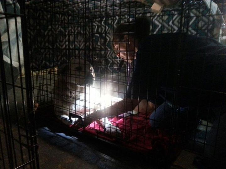 Veterinarians have been working day and night to check incoming animals for injuries and signs of smoke inhalation.