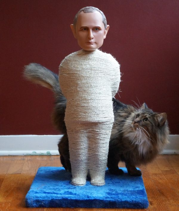If Donald Trump can scratch Vladimir Putin's back, why can't your cat scratch everywhere else. Yes, all cats will be rushin'