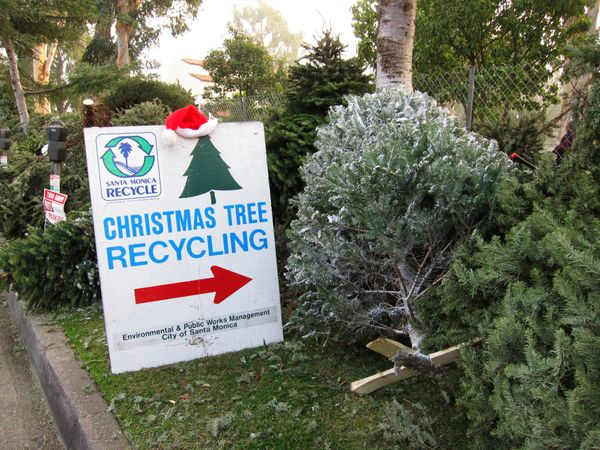"Don't just chuck your used Christmas tree in the trash after the holidays. Repurpose or <a href=""http://www.realchristmastree"