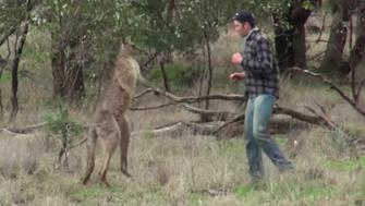 A man is seen preparing to fight a kangaroo after it attacked his dog