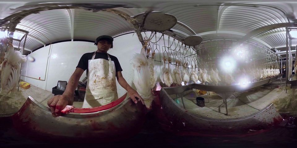 The viewer is given a chilling perspective as cameras are shackled to the slaughterhouse