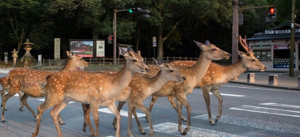 These Photos Of A City Ruled By Deer Are Magical