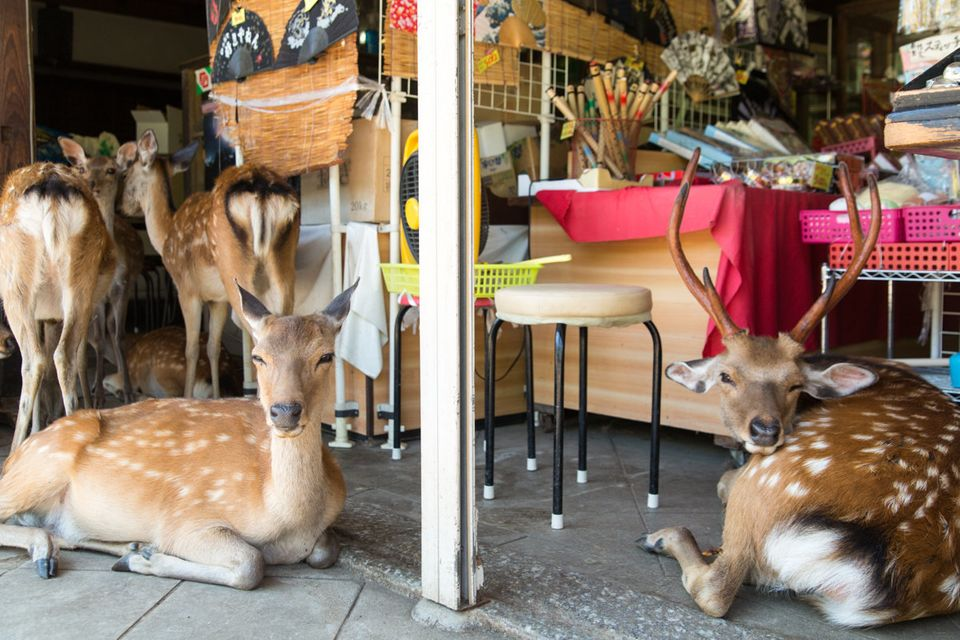 These Photos Of A City Ruled By Deer Are