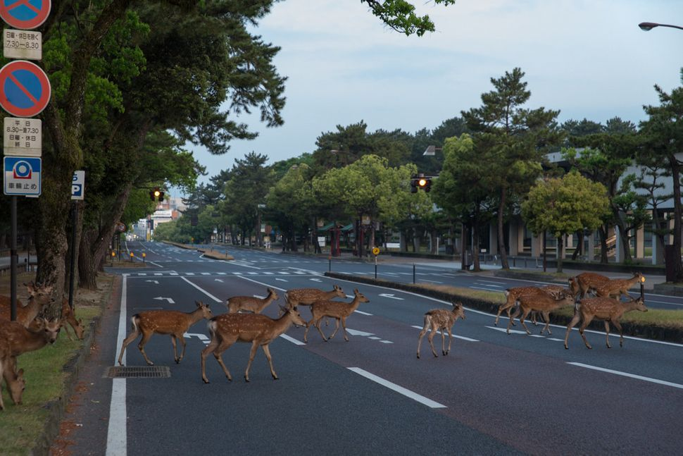Deer like the collective action.