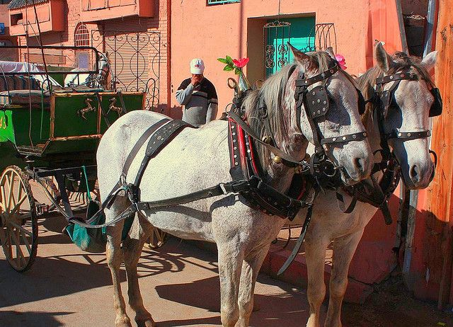 A horse and buggy ride down the streets of Morocco is romantic.