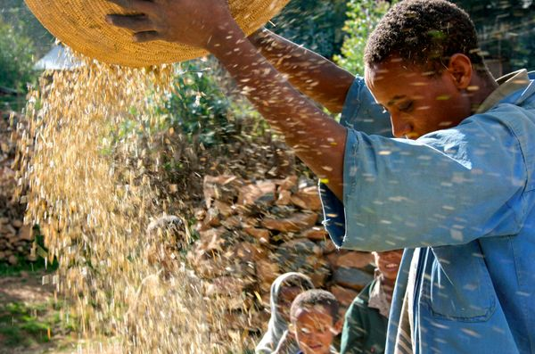 In Ethiopia, like many other developing countries, food waste occurs because of a lack of efficient methods to transport and