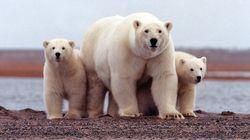 Scientists Predict Dire News For Polar