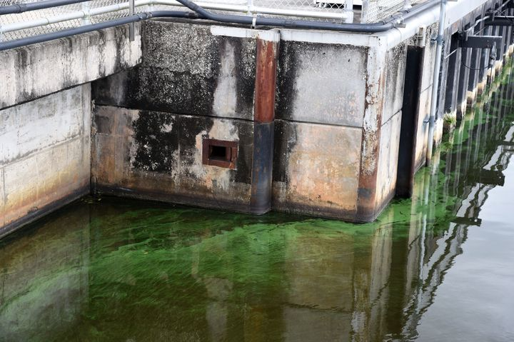Algal blooms, like the one seen in Florida's St. Lucie River this summer, have been linked to fertilizer runoff from farms an