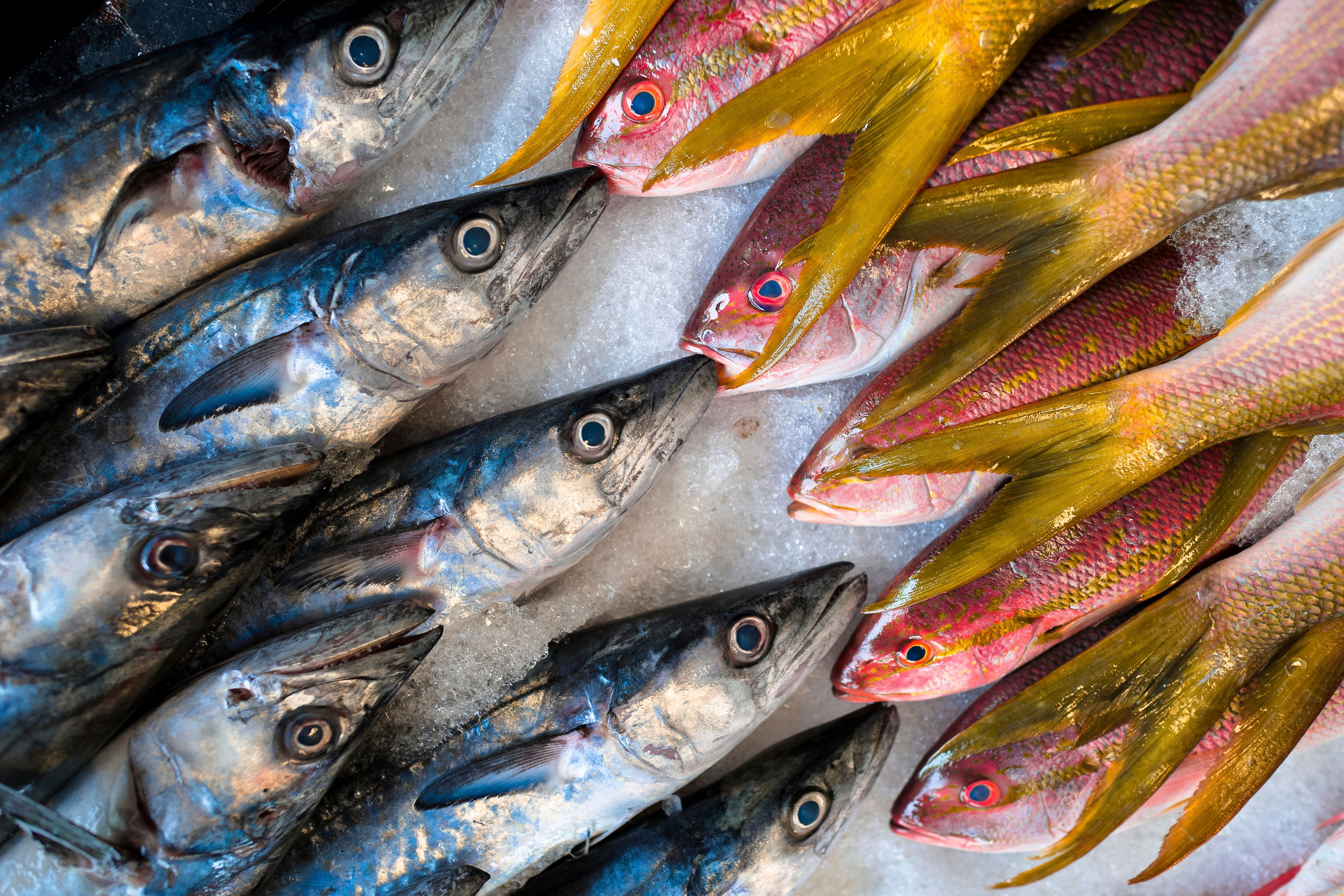 VERACRUZ, MEXICO - JUNE 29: Red snappers and small wahoos are seen for sale at the seafood and fish market in Veracruz, Mexico, 29 June 2015. (Photo by Jan Sochor/Latincontent/Getty Images)