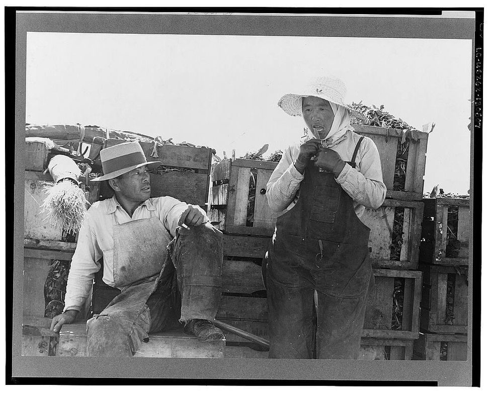 Japanese-American agricultural workers packing broccoli near Guadalupe, Calif.